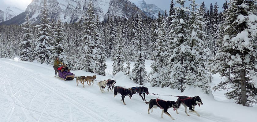 banff-mushing.jpg