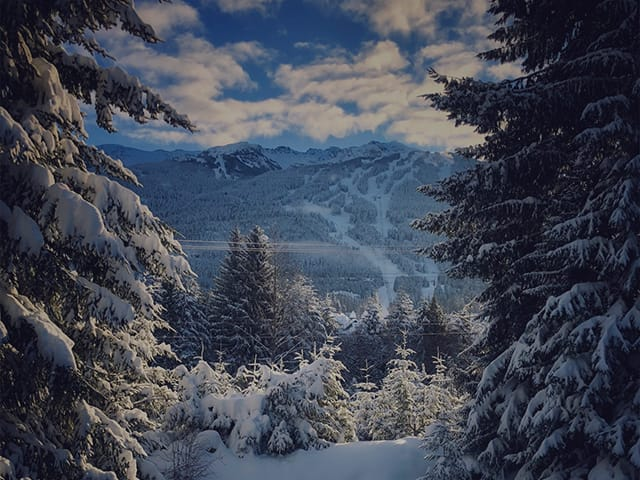 Snow covered trees in Whistler